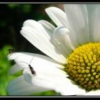 Fliegen auf Blume