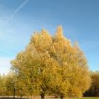 04-herbstbaum.jpg